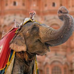 Joie éléphantesque