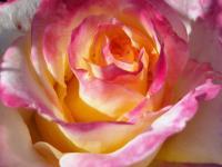 Flower 759276 1920 2